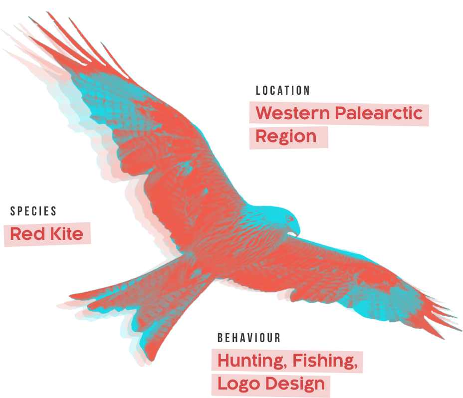 Red Kite Logo Monogram