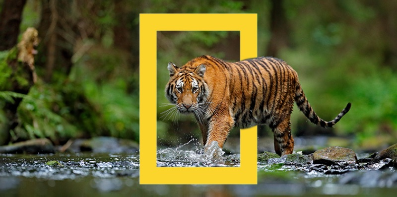 National Geographic Logo Example